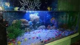 New Fish Aquarium with decoration