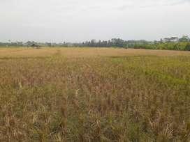 Tanah Strategis Bangun Industri Pinggir Jalan Desa Gunungsari