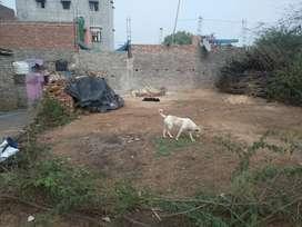 50 gj plot in delhi - 600000/- only