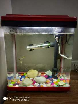 Fish tank with 6 fishes