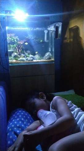 Aquarium dan isinya