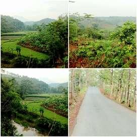 Lahan Perkebunan 44 Hektar 670mdpl Lokasi Karanganyar hrg 100rb/m2