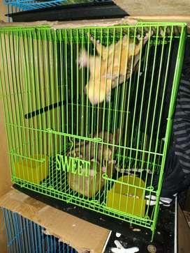 Kndng ukurn s , bs buat burung sg hamster tupai