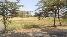 Jual tanah sawah di sidokarto Godean Sleman Yogya dekat polsek Pasar