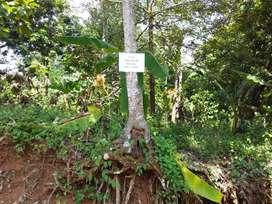 Layak Investasi Tanah HM Gunung Pati Dekat Gua Kro Semarang