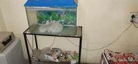 My new fish aquarium with all accessories