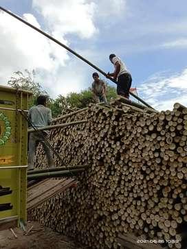 Dolken,bambu dan kaso