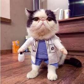 Baju kostum anjing kucing model DOKTER pet costume ukuran L