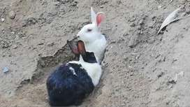 Rabbits up for sale