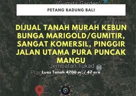 DIJUAL TANAH MURAH PELAGA, PETANG BADUNG BALI