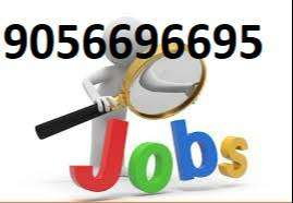 required experienced staff for govt. approved immigration company