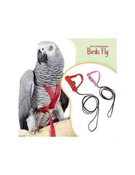 African Grey Parrot chick