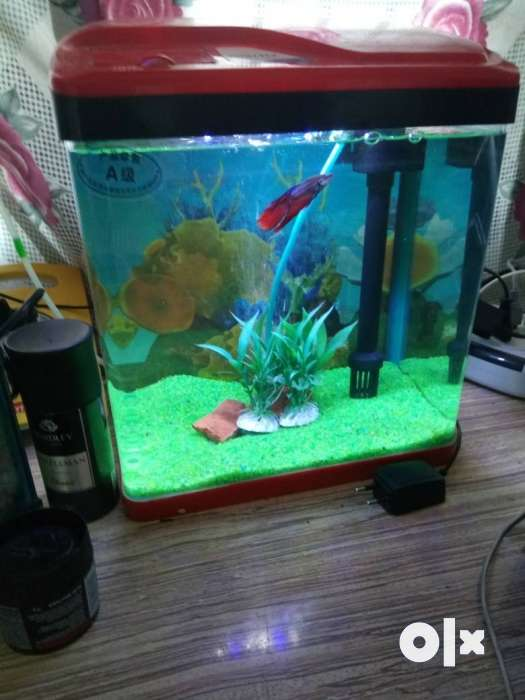 All types of pets available here.. Aquarium, 0