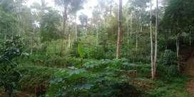 Jual Tanah SHM 115 Ubin