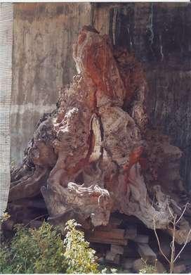 Akar kayu jati ukir 8 kepala naga