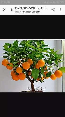 Orange n lemon char khara pamme