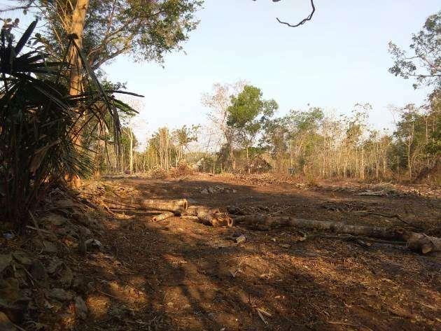Ayo Belilah Tanah Strategis Area Sentolo Kulonprogo Harga Nego 0
