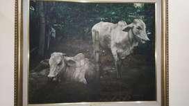Lukisan 2 sapiminysk 2 sapi