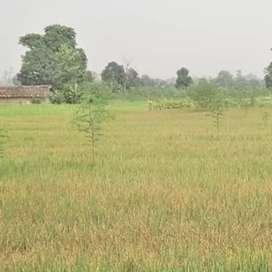 10 decimal Land(khet) for sale in khairpur jindal raigarh,chattisagrh.