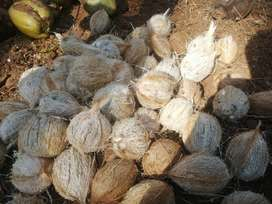 Coconut Bulk and Retail sale