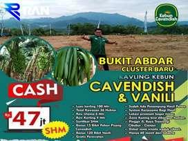 Tanah Kebun Pisang Cavendish&Vanilli