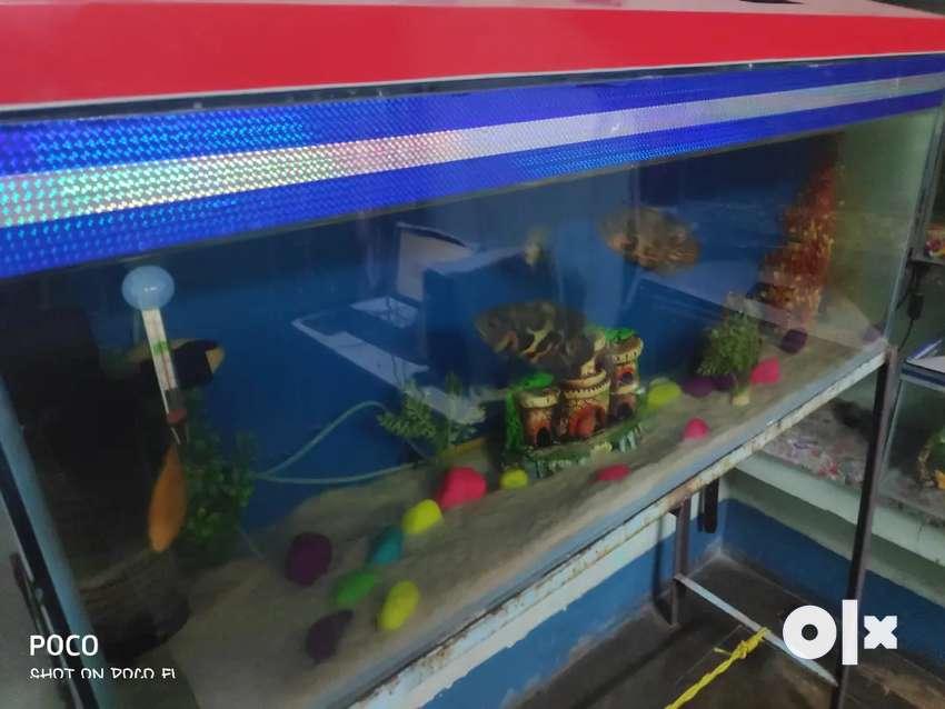 4ft long aquarium 0
