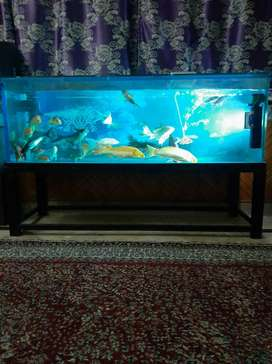 Rwp/isb 5 feet Aquarium,frame,filter,rechargeable air pump and fishes