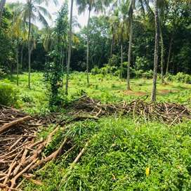 Plots for sale alanallur mannarkad 50 ,20  cent