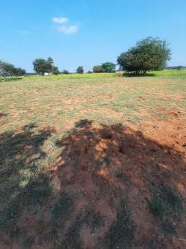 1 acre coconut farm and 2 acres of agriculture land for sale
