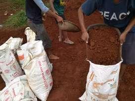 Media tanah merah perkarung untuk mempercepat tumbuh kembang tanaman