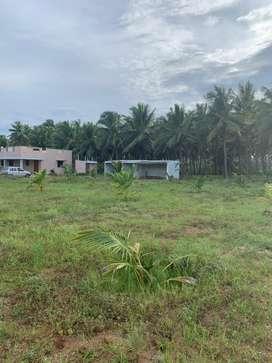 Agriculture land/agricultural land/coconut farm/farm land/farm house