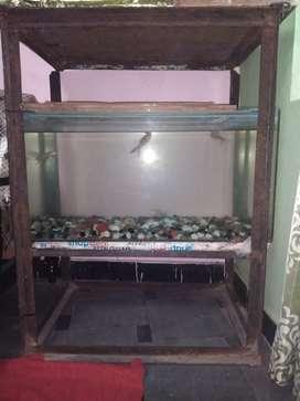 Only aquarium