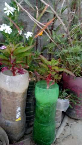 Beautiful Green Plants on very cheap Price