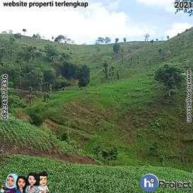 Dijual 12,000 M2 Tanah bukit di Kuta Lombok tengah T503