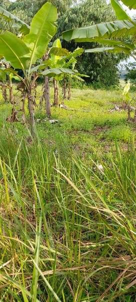 Dijual Cepat Tanah Kosng untuk Investasi jangka panjang