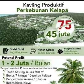 Dijual murah kavling produktif perkebunan kelapa