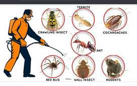 Need executive for pest control in Jamshedpur..