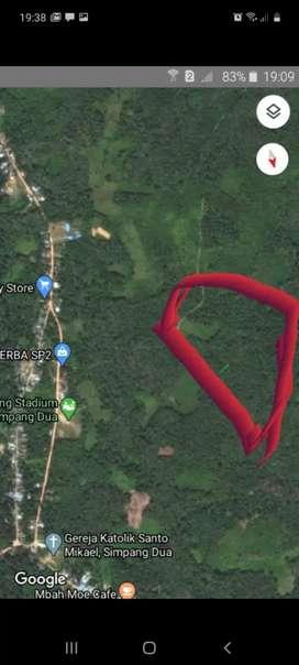 Jual rugi Kebun sawit 15 hektar