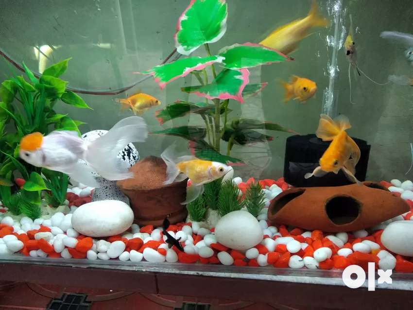 Fish aquarium,3feet×11/2feet×1feet,with stand,fishes, filters 0
