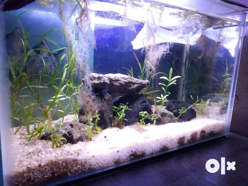 Cheap planted tank 0