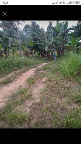 Tanah murah B.Lampung