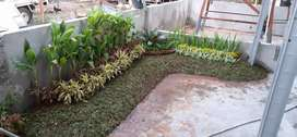 Tukang pasang taman - tukang taman rumah - jual tanaman hias