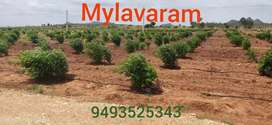 Vijayawada to 60km 100 square yards 1.5 lack only dasara offer