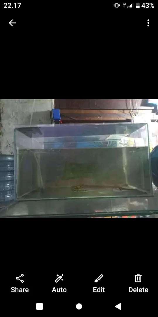 ikan & AQUARIUM 1 set Lok tanah abang