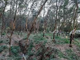 2 ഏക്കർ 20 സെന്റ് റബ്ബർ തോട്ടം തിരുവാലിയില് (ഹൌസ് പ്ലോട്ട്)