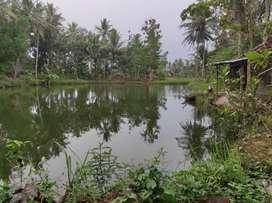 Investasi tanah dan kolam