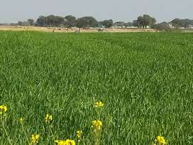 Agricultural land on ideal location near fateh jang on kohat road