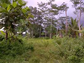 Tanah Murah Siap Dibangun Rumah Lokasi Sinduharjo Jogja Legalitas Leng