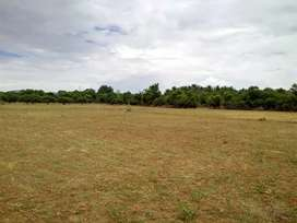 3 Acres Excellent commercial / Agriculture land with mango Trees /