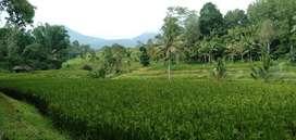Jual tanah sawah produktif mengesta dekat jatiluwih 80are